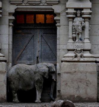 Imagen de National Geographic de elefantes