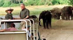 Hillary Bill Clinton con elefantes
