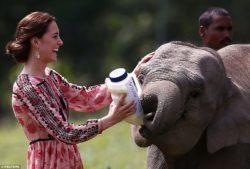 Imagen de Kate Middletton con elefantes