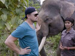 Imagen de Leonardo Dicaprio con elefantes