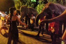 Imagen de Rihanna con elefantes