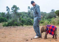 Imagen de Yao Ming con elefantes