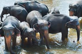 Imagen de elefantes 10