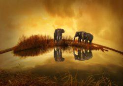 Imagen de elefantes