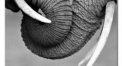 Alfombrilla de elefantes